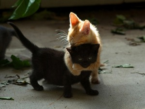 kitten_hugs